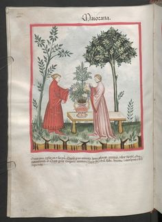 Cod. Ser. n. 2644, fol. 33v: Tacuinum sanitatis: Maiorana