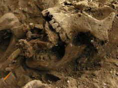 """800-year old witch found with 7 nails through her jaw and 13 nails surrounding her skeleton. """"She was buried in bare earth, not in a coffin and she had no shroud around her either, intriguingly other nails were hammered around her to pin down her clothes.This indicates to me that it was an attempt to make sure the woman even though she was dead did not rise from the dead and unnerve the locals who were no doubt convinced she was a witch with evil powers."""""""