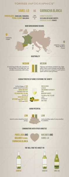 Xarel·lo vs Garnacha Blanca: Infographic by 'Club Torres' #wine101 #infographic