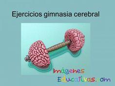 Ejercicios gimnasia cerebral