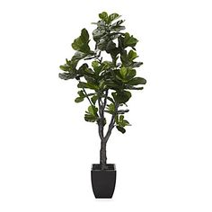 Fiddle Leaf Tree | Botanicals & Plants | Home Accents | Decor | Z Gallerie