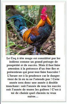 image du coq
