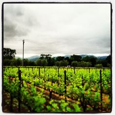 [ @ ] napavalleyinc #saturday #view from eastern foothills to western #napavalley mountains