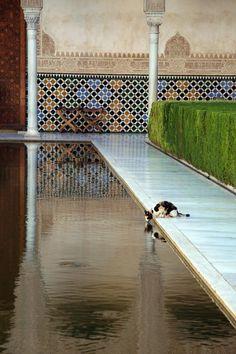 Rincones de Andalucía: la Alhambra (Granada) / Places of Andalusia: the Alhambra (Granada), by @travistravis7