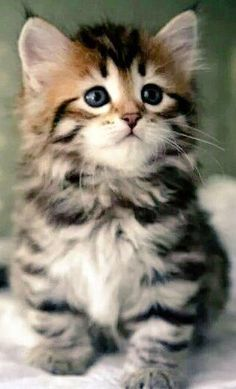 cute cats and kittens baby - Kitty & Co. KG - Cats - cute cats and kittens baby – Kitty & Co. KG – cute cats an - Cute Kittens, Cutest Kittens Ever, Beautiful Kittens, Cute Baby Cats, Kittens And Puppies, Cute Cat Gif, Cute Little Animals, Pretty Cats, Cute Funny Animals