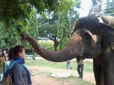 Mysore Palace - Elephant Ride  Angelika Trace