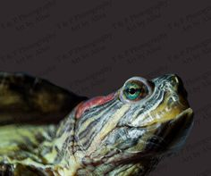 TURTLE Digital download photography instant от Turtlesandpeace