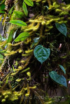 forest undergrowth, temperate rainforest, Papua New Guinea | Marc Anderson Photography
