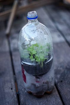 Soda Bottle Mini Greenhouses for Winter Sowing