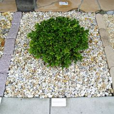 1000 images about river rocks landscaping on pinterest for Smooth river rocks for landscaping