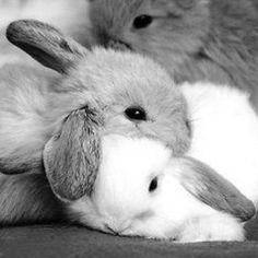 In case you are looking for a furry friend which is not just extremely cute, but very easy to have, then look no further than a pet bunny. Cute Baby Bunnies, Cute Babies, Lop Bunnies, Animals And Pets, Funny Animals, Wild Animals, Cute Little Animals, Pet Rabbit, Tier Fotos