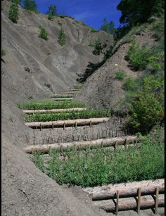 walls of willow trees in the Southern French Alps gullies to trap dirt that blocks hydroelectric dams downstream.building walls of willow trees in the Southern French Alps gullies to trap dirt that blocks hydroelectric dams downstream.