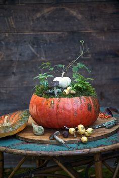 Decorating with Pumpkins LUV LUV LUV this pumpkin terrarium !  from @Kristen Lidbeck