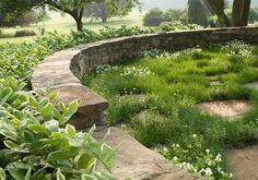 This is planting design based on the premise of differential mowing: design by Terrain Modern Garden Design, Garden Landscape Design, Garden Landscaping, Landscape Walls, Landscape Architecture, Sunken Garden, Interior Garden, Garden Spaces, Dream Garden