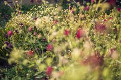 We created a wide and varied planting scheme throughout the garden, creating beautiful areas of vibrant colours, styles and textures. Vibrant Colors, Colours, Surrey, Planting, Gardens, Texture, Landscape, Beautiful, Design