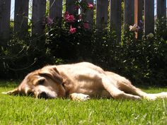 Landscaping a dog friendly yard -- http://e-landscapedesign.com/landscape-design-tips/landscaping-a-dog-friendly-yard.html