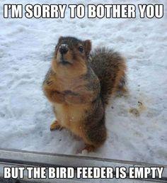 Such a polite squirrel.