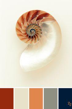 ZJ Colour Palette 1012 #colourpalettes #colourinspiration Website Color Schemes, Paint Color Chart, Red Colour Palette, Color Balance, Design Seeds, Colour Board, Nautilus, Color Stories, Color Theory