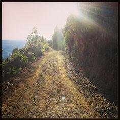Mt St Helena - Napa Valley