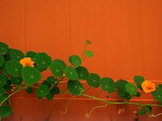Just planted some nasturtiums! So excited to see how they turn out.