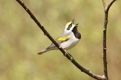 1.5 Billion Birds Lost in North America Since 1970s