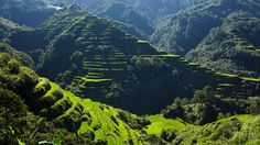 """The Banaue Rice Terraces are 2,000-year-old terraces that were carved into the mountains of Ifugao in the Philippines by ancestors of the indigenous people. The Rice Terraces are commonly referred to by Filipinos as the """"Eighth Wonder of the World"""" It is commonly thought that the terraces were built with minimal equipment, largely by hand. It is said that if the steps were put end to end, it would encircle half the globe."""
