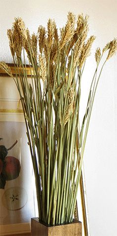Dried Grasses / Hooked Barley