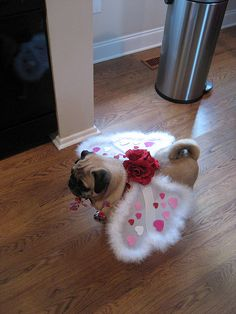 pug costume | pug in valentine costume | Flickr - Photo Sharing!