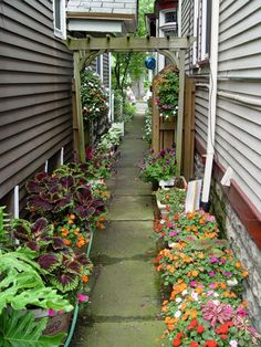 """One of the latest trends in growing plants is """"containerscaping."""" See why more gardeners are opting towards plants in containers and not in the ground."""