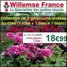 Promos: 15% de réduction sur la Collection de 3 géraniums vivaces doubles (1 rose + 1 bleu + 1 blanc) chez Willemse. http://www.miss-bon-reduction.fr//details-bon-reduction-Willemse-i200-c1833840.html