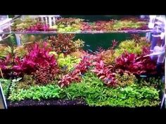Dutch style planted tank 720 liters for german viewers - YouTube