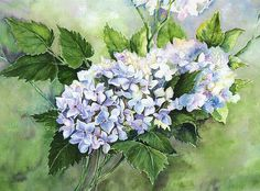 Watercolor of Hydrangeas