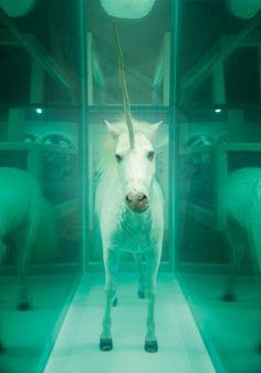 2 cosas que necesito: 1 unicornio y un espejo 360