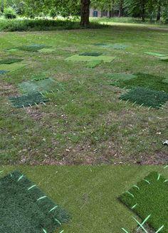 Patchwork lawn by Hannah Streefkerk. GENIUS