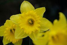 Ten Common Mistakes Everyone Makes In Flower Art Names Spring Flowering Bulbs Flower Names Flowers Name In Hindi