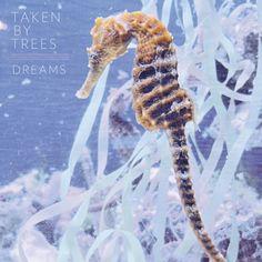 """LISTEN: Taken By Trees – """"Dreams"""""""