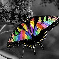 BUTTERFLY~Rainbow butterfly ~
