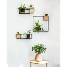 We put our green thumbs to work this week and created this #minimalist succulent wall, with our CUBIST shelves and KERA cork bathroom tumblers.