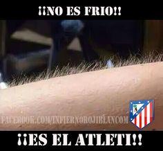 No es frío! Es el Atleti!!! At Madrid, Chipmunks, Soccer, Life, Facebook, Sentences, Antoine Griezman, Football Memes, Athlete