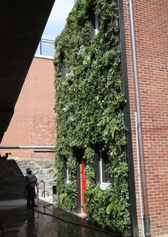 - FALL MAINTENANCE FOR FIRE STATION GREENWALLS