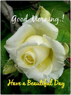 472 best good morning images on pinterest in 2018 good morning orchids white roses red roses yellow roses lavender roses exotic flowers mightylinksfo