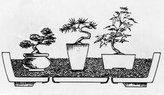 Placing miniature bonsai in a bed of sand or small gravel keeps them moist and also keeps them from tipping over.