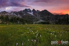 A beautiful plateau dotted with cotton-grasses at the foot of the Tre Levanne,…
