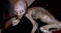Do aliens exist? Maybe they left a few friends behind. Dark 5 takes a look at five alien creatures that may have been left behind on ea. History Channel, Alien Creatures, Sea Creatures, National Geographic, Alien Documentary, Alien Pictures, Caught In A Trap, Alien Encounters, Aliens And Ufos