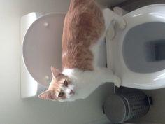 Mr. Indi, Toilet training.