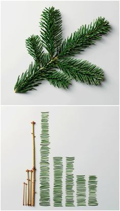 Pine Leaves by Ursus Wehrli. I bought this book for my SIL for Christmas, and she loved it.