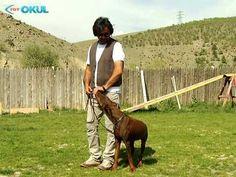 Köpeğimi Eğitiyorum - 2. Bölüm - TRT Okul Horses, Youtube, Animals, Animales, Animaux, Animal, Animais, Horse, Youtubers