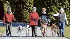 New report on dog racing deaths in Florida paves the way for political fight