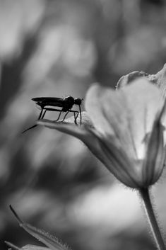 Insect Photography, Black And White Photography, Silver Rings, Jewelry, Black White Photography, Jewlery, Jewerly, Schmuck, Jewels