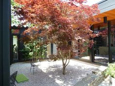 A minimalist approach to an interior courtyard results in a zen-like retreat where a Japanese red maple (acer bloodgood) becomes the focal point and an espalier green apple tree, carney rock and crushed gravel add to the austere beauty of the space.